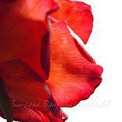 Цветы и флористика ручной работы. Ярмарка Мастеров - ручная работа ЯРКАЯ (роза с бутонами.флористическая полимерная глина). Handmade.