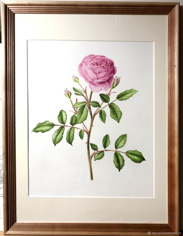 35 карточек в коллекции «Рисунки роз акварелью » пользователя Юлия