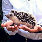 handmade. Livemaster - original item Manual hedgehog Muftic / toy interior the hedgehog / hedgehog felted wool. Handmade.