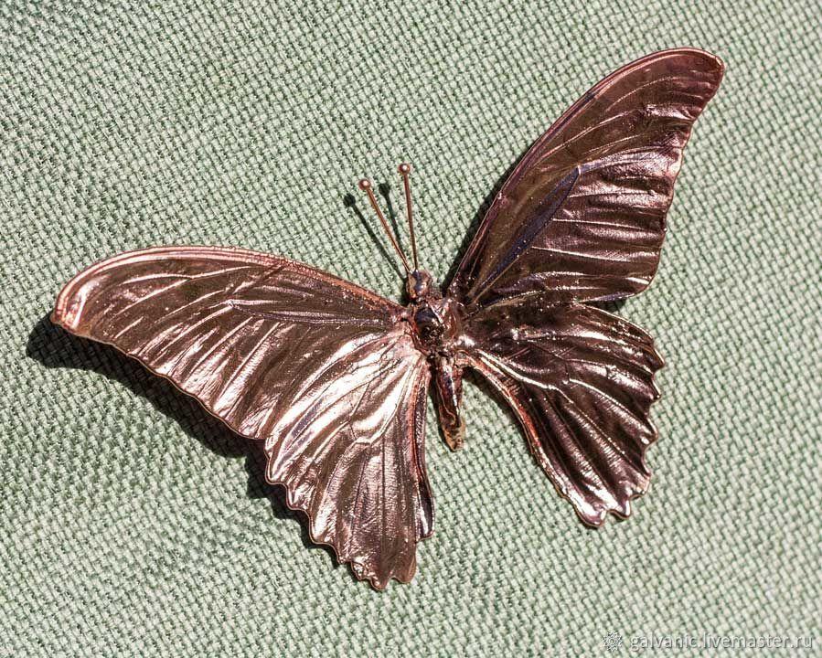 Бабочка тропическая омедененная, Бусины, Санкт-Петербург,  Фото №1
