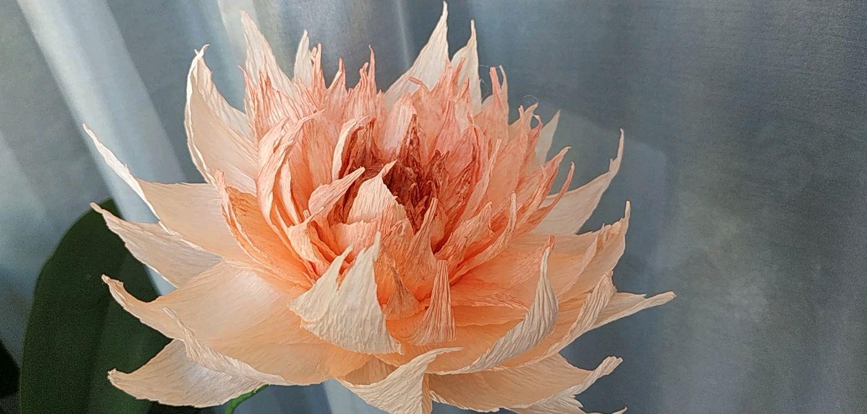 цветок бумажный, Цветы, Горно-Алтайск,  Фото №1