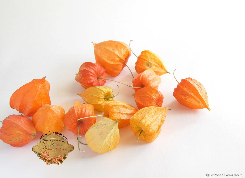 Сухоцвет физалис фонарики 10 шт для флористики, декора, Растения, Железногорск,  Фото №1