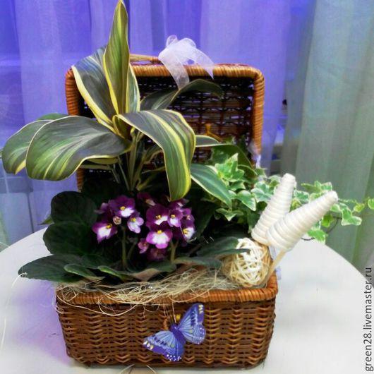 Букеты ручной работы. Ярмарка Мастеров - ручная работа. Купить Подарочная композиция из горшечных растений. Handmade. Подарок на любой случай