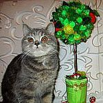 топиарии -открытки - армавир (kalinichenko300) - Ярмарка Мастеров - ручная работа, handmade