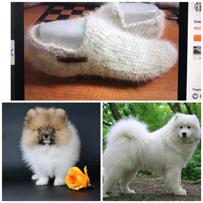A deal of dog hair(fur), Socks, Kursk,  Фото №1