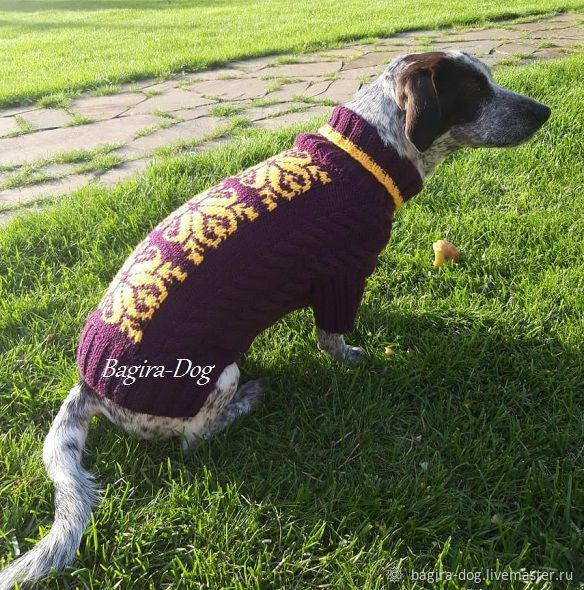 Knitted sweater for dachshund ' Jacquard', Pet clothes, Moscow,  Фото №1