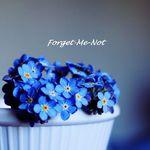 nezabudochka