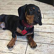 Для домашних животных, handmade. Livemaster - original item Collar-herring for dogs made of genuine leather, leather collar. Handmade.