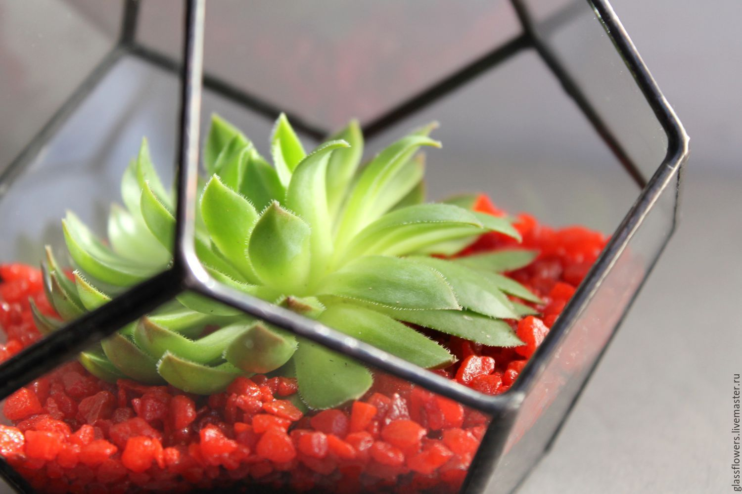 The Floriana geometric dodecahedron with Echeveria. The Floriana. mini garden, Florariums, St. Petersburg,  Фото №1