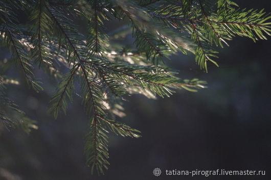 """Фото """"Солнечный луч в хвойном лесу"""", Фотографии, Сергиев Посад,  Фото №1"""