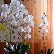 Цветы и флористика ручной работы. Ярмарка Мастеров - ручная работа Орхидея .Холодный фарфор. Handmade.