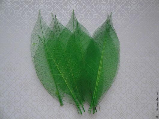 Открытки и скрапбукинг ручной работы. Ярмарка Мастеров - ручная работа. Купить Скелетированные листья зеленые. Handmade. Зеленый, листья