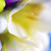 Картины и панно ручной работы. Ярмарка Мастеров - ручная работа Фрезии 3. Фотокартина. Handmade.