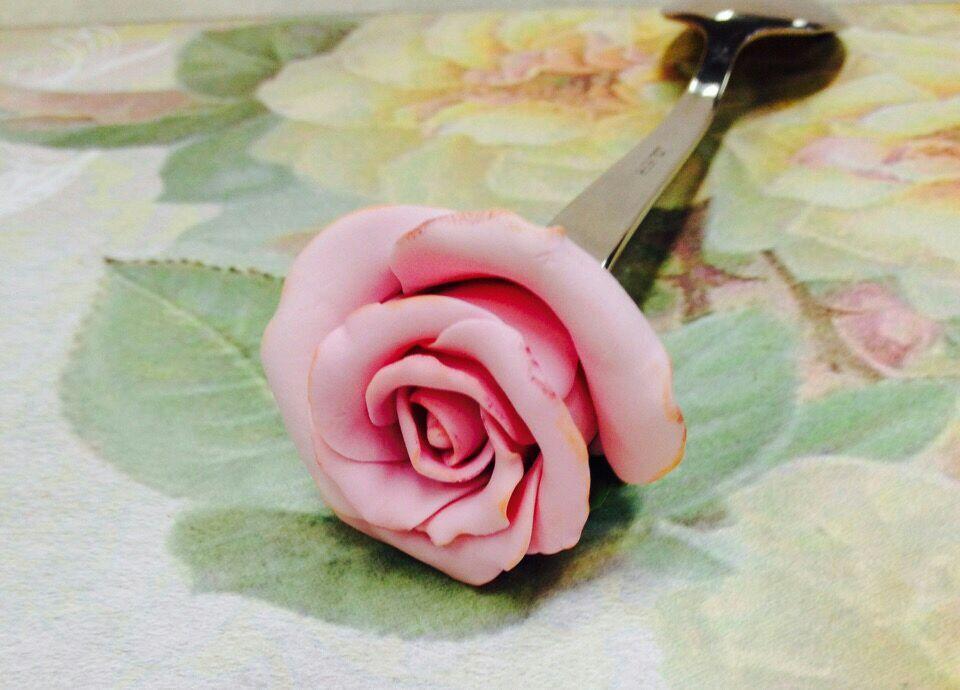 Чайная роза, Ложки, Выборг,  Фото №1