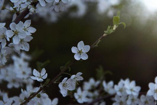 Картины цветов ручной работы. Ярмарка Мастеров - ручная работа. Купить Цветение вишни. Handmade. Цветение, сакура, вишня, сад