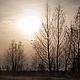 Осенний пейзаж фотокартина природы для интерьера, картина природа, сепия. Тонкие прозрачные деревья тихо провожают теплый день.  Фото картина «Блюз вечернего Солнца» © Ануфриева Елена