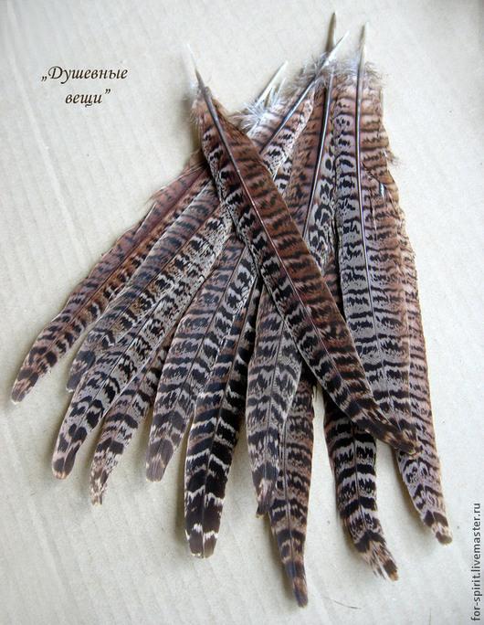 Другие виды рукоделия ручной работы. Ярмарка Мастеров - ручная работа. Купить Перья фазана длинные (15-20 см). Handmade.