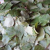 Материалы для творчества handmade. Livemaster - original item Young birch leaves. Handmade.