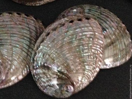 """Аппликации, вставки, отделка ручной работы. Ярмарка Мастеров - ручная работа. Купить Морская раковина """"Галиотис"""" очищенная и полированная. Handmade."""