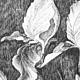 Картины цветов ручной работы. Ирисы. Наталья Атлянова. Интернет-магазин Ярмарка Мастеров. Цветы, штрих