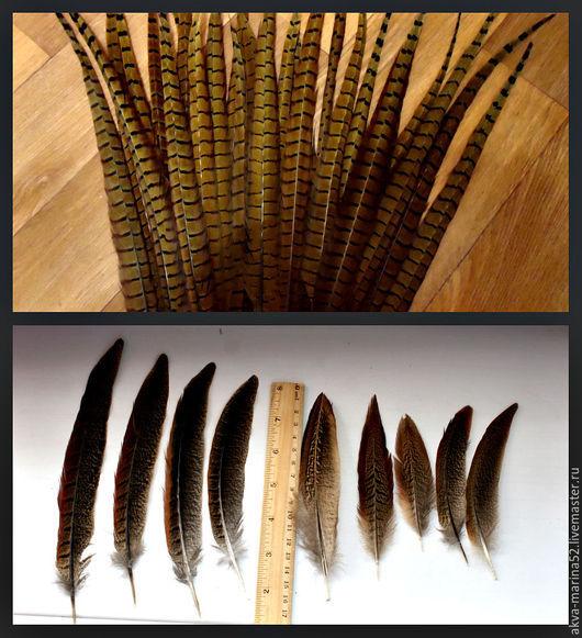 Ловцы снов ручной работы. Ярмарка Мастеров - ручная работа. Купить Перья фазана длинные 20-50 см см. Handmade.