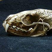 Фен-шуй и эзотерика ручной работы. Ярмарка Мастеров - ручная работа Оберег череп соболя - оберег. Handmade.