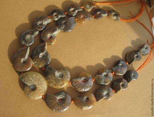 Для украшений ручной работы. Ярмарка Мастеров - ручная работа. Купить 12 шт, Аммониты бусины, нить, целые аммониты. Handmade.