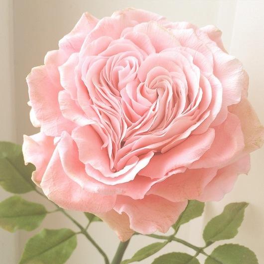 Цветы ручной работы. Ярмарка Мастеров - ручная работа. Купить Сердце из лепестков. Роза. Полимерная глина. Handmade. Розовый, романтика