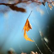 Картины и панно ручной работы. Ярмарка Мастеров - ручная работа Фотокартина для интерьера. МЕЖДУ НЕБОМ... Handmade.