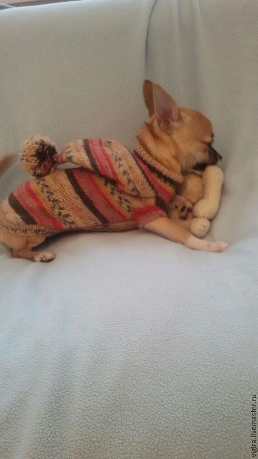 Одежда для собак, ручной работы. Ярмарка Мастеров - ручная работа. Купить Кофточка для Лили. Handmade. Комбинированный, вязаная