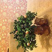 Цветы и флористика ручной работы. Ярмарка Мастеров - ручная работа Бонсай. Handmade.