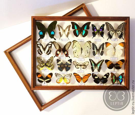 Персональные подарки ручной работы. Ярмарка Мастеров - ручная работа. Купить Коллекция бабочек (2). Handmade. Комбинированный, красивый подарок