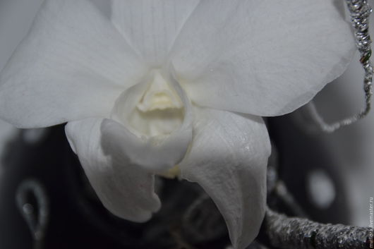 Парящая Орхидея