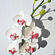 Интерьерные композиции ручной работы. Ярмарка Мастеров - ручная работа. Купить Орхидея фаленопсис.. Handmade. Белый, белая орхидея
