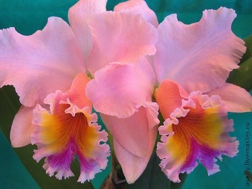 Материалы для флористики ручной работы. Ярмарка Мастеров - ручная работа. Купить Набор для орхидеи Каттлея, размер M, Н-33. Handmade.