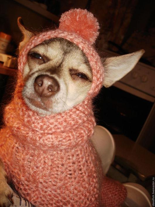 Одежда для собак, ручной работы. Ярмарка Мастеров - ручная работа. Купить Комбинезон и шапочка для тоя или чихуа. Handmade. Коралловый