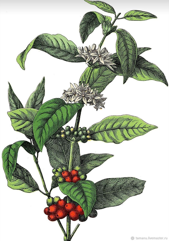 Coffee Violet: духи авторские, натуральные, Духи, Санкт-Петербург,  Фото №1