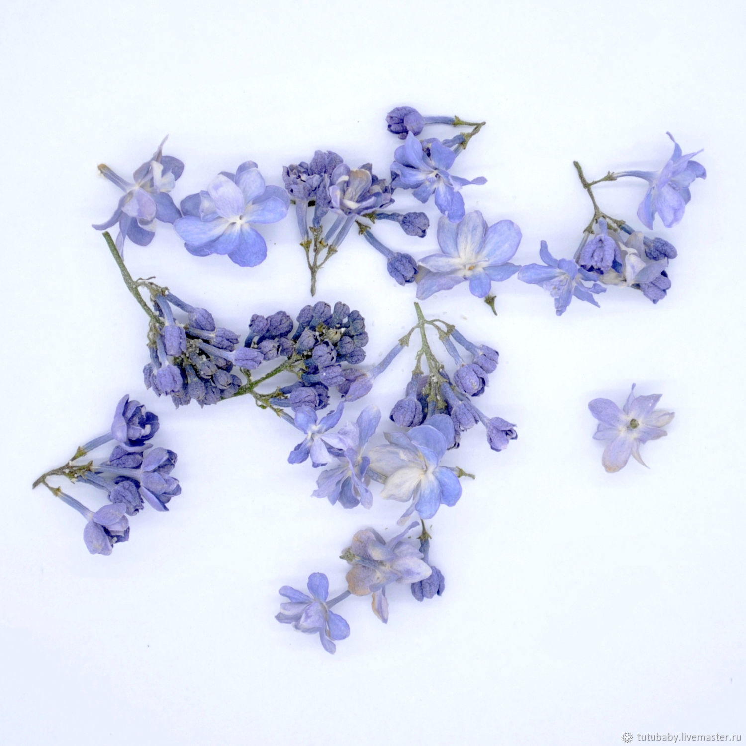 Lilac, three-dimensional drying, The dried flowers, Buzuluk,  Фото №1