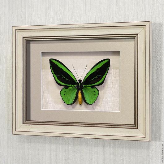 Абстракция ручной работы. Ярмарка Мастеров - ручная работа. Купить Бабочка Зеленая Птицекрылка Приам. Handmade. Ярко-зелёный, бабочки