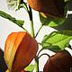 Интерьерные композиции ручной работы. Оранжевый привет в цветках физалиса..... Landora (Galitn). Ярмарка Мастеров. Цветы из полимерной глины, красиво