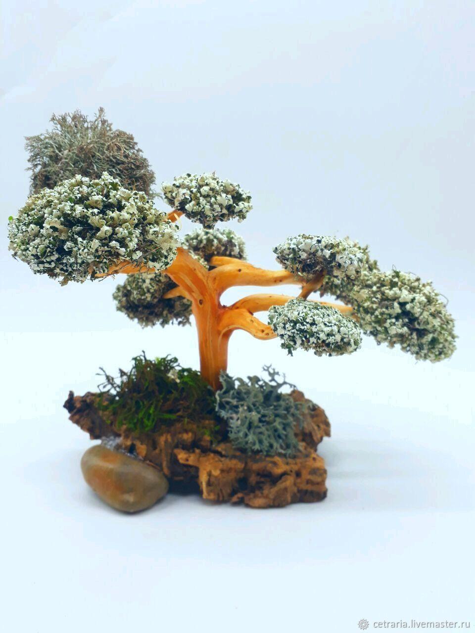 Персональный подарок - живое Дерево из цетрарии, Подарки, Москва, Фото №1