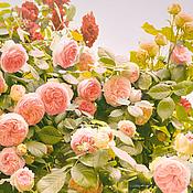 Картины и панно handmade. Livemaster - original item Rose Photo flowers picture for bedroom decor or living room. Handmade.
