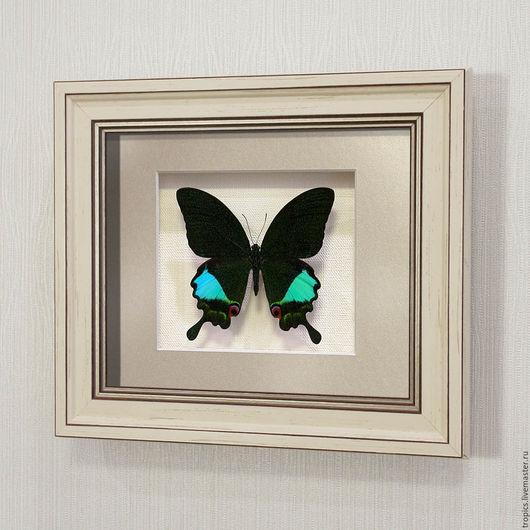 Абстракция ручной работы. Ярмарка Мастеров - ручная работа. Купить Бабочка Парусник Карна. Handmade. Тёмно-зелёный, бабочки в картине