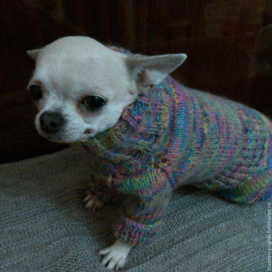 Одежда для собак, ручной работы. Ярмарка Мастеров - ручная работа. Купить Теплый комбинезон для чихуа. Handmade. Комбинированный, комбинезон