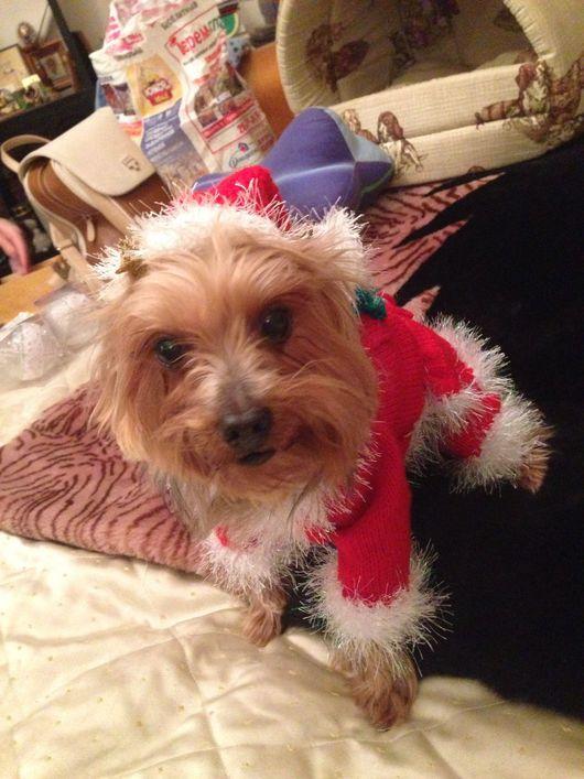 Одежда для собак, ручной работы. Ярмарка Мастеров - ручная работа. Купить Дед Мороз. Handmade. Мятный, йорк, тепло
