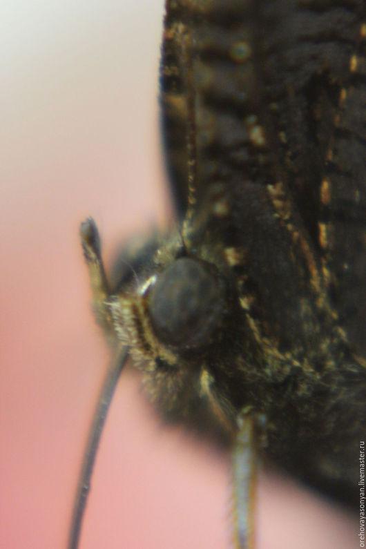 Бабочка пьёт давно ждавший её разбавленный водой щербет.