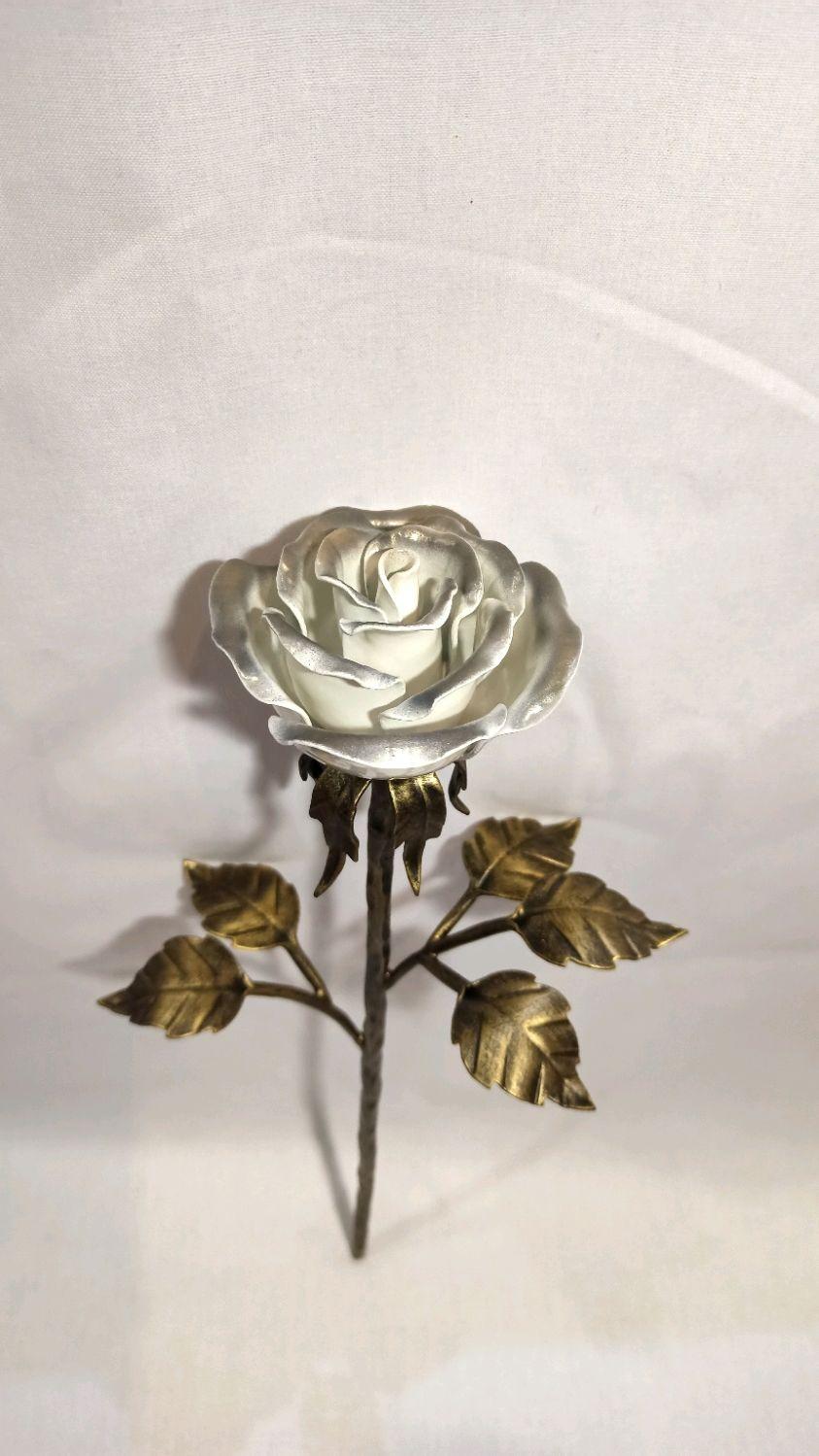 Роза, Цветы, Волгоград,  Фото №1