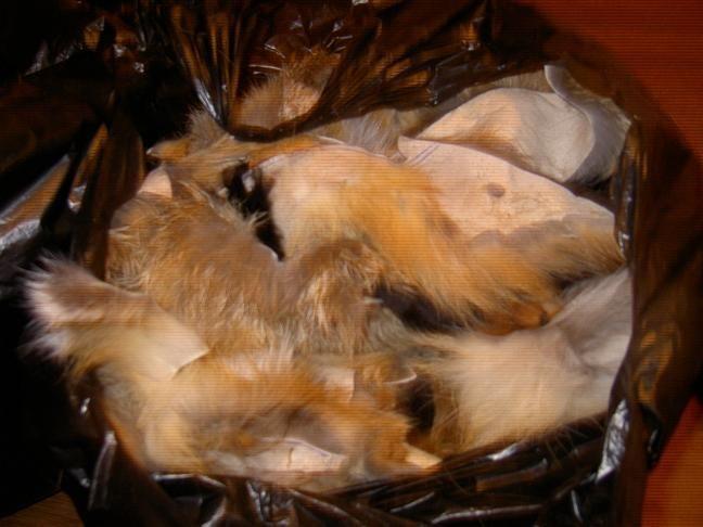 Лоскут меха лисы, обрезки, Мех, Москва,  Фото №1