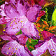 Oil painting Flowers rosemary. Pictures. Zabaikalie. Online shopping on My Livemaster.  Фото №2
