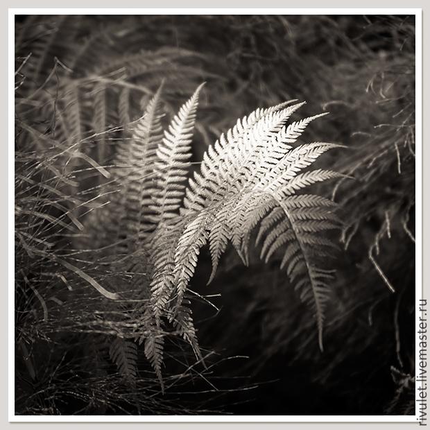 Черно-белая фотокартина для интерьера «Пение Синей птицы в цветении папоротника. `Фа` второй октавы» - часть триптиха - купить фотокартины для интерьера